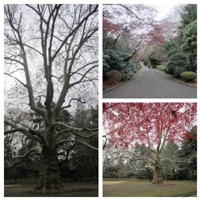 存在感ある大きな木やいつもの道や
