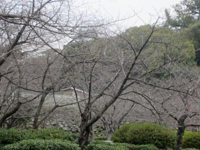 おくに和歌山城がみえます