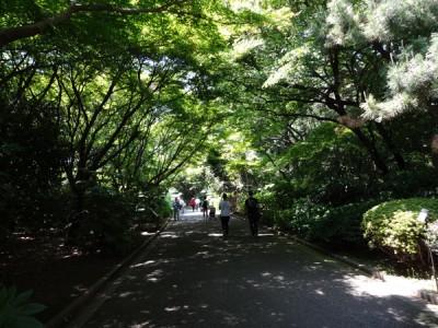 木陰がすずしくて気持ちいい季節になりました。