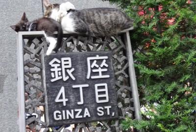 銀座通りの標識の上にのんびり