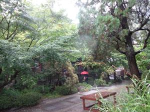 雨粒が跳ねてます 写真は境内の入口まで