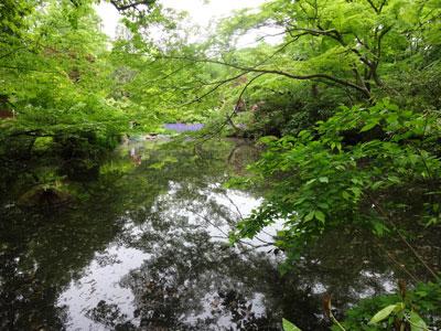 青い紅葉が池に映って