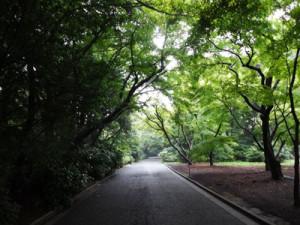 小雨の新宿御苑の道